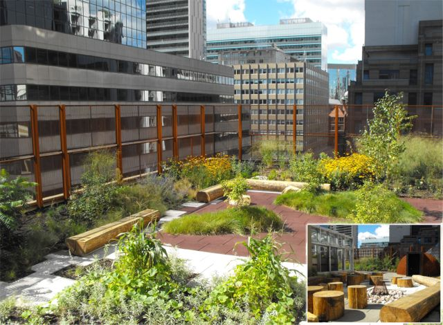 Greenroofs.com Project Week Native Child and Family Services of Toronto