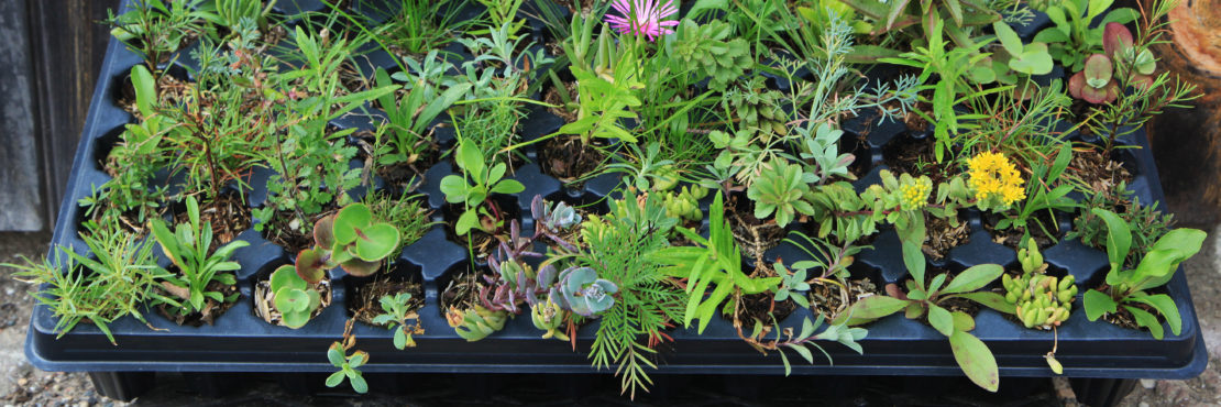 Emory Knoll Farms / Green Roof Plants Featured Image