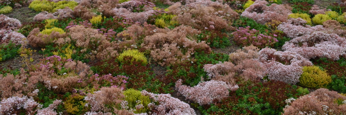 Green Roof Solutions Featured Image