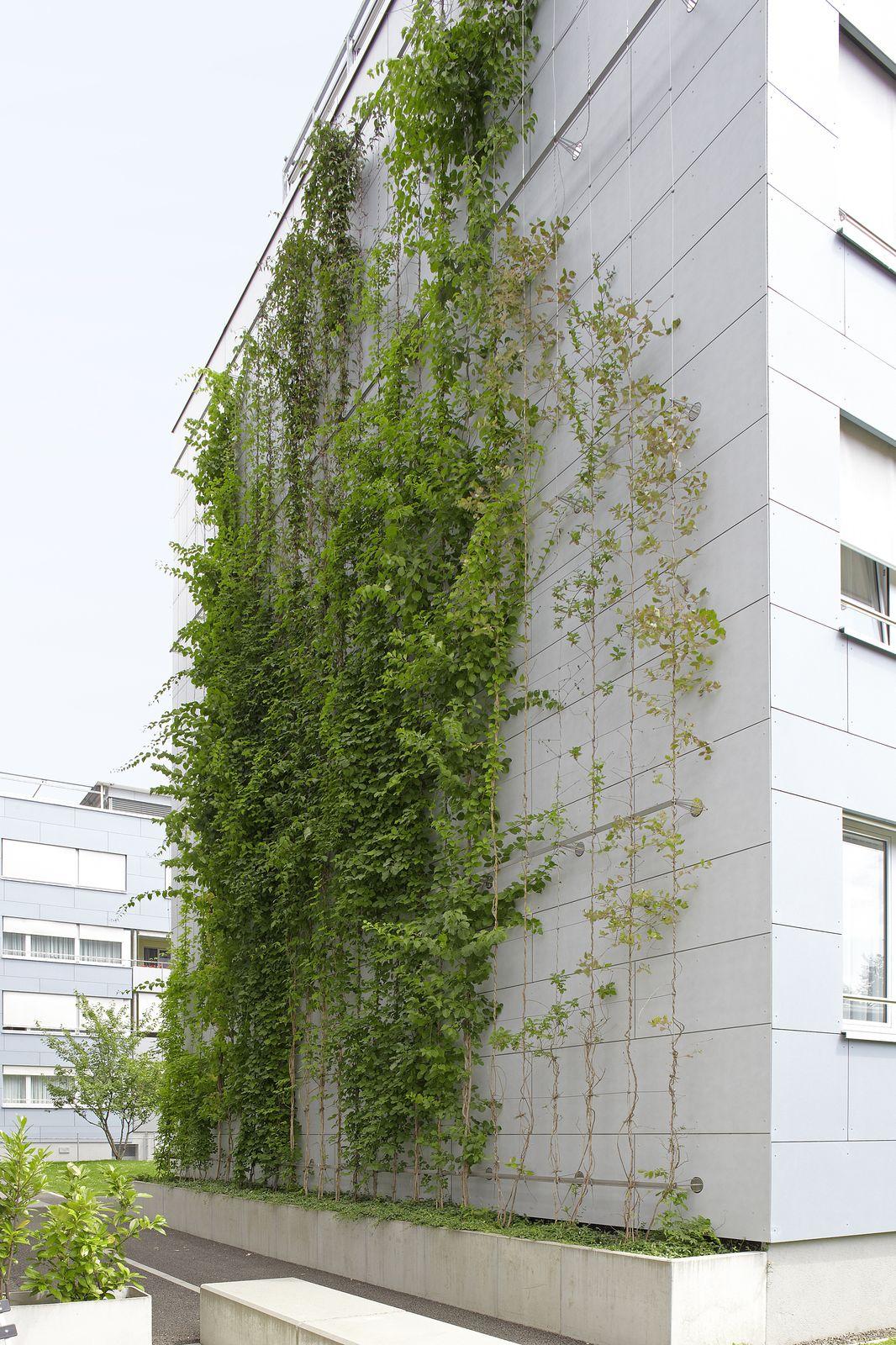 Interior Plants Architecture