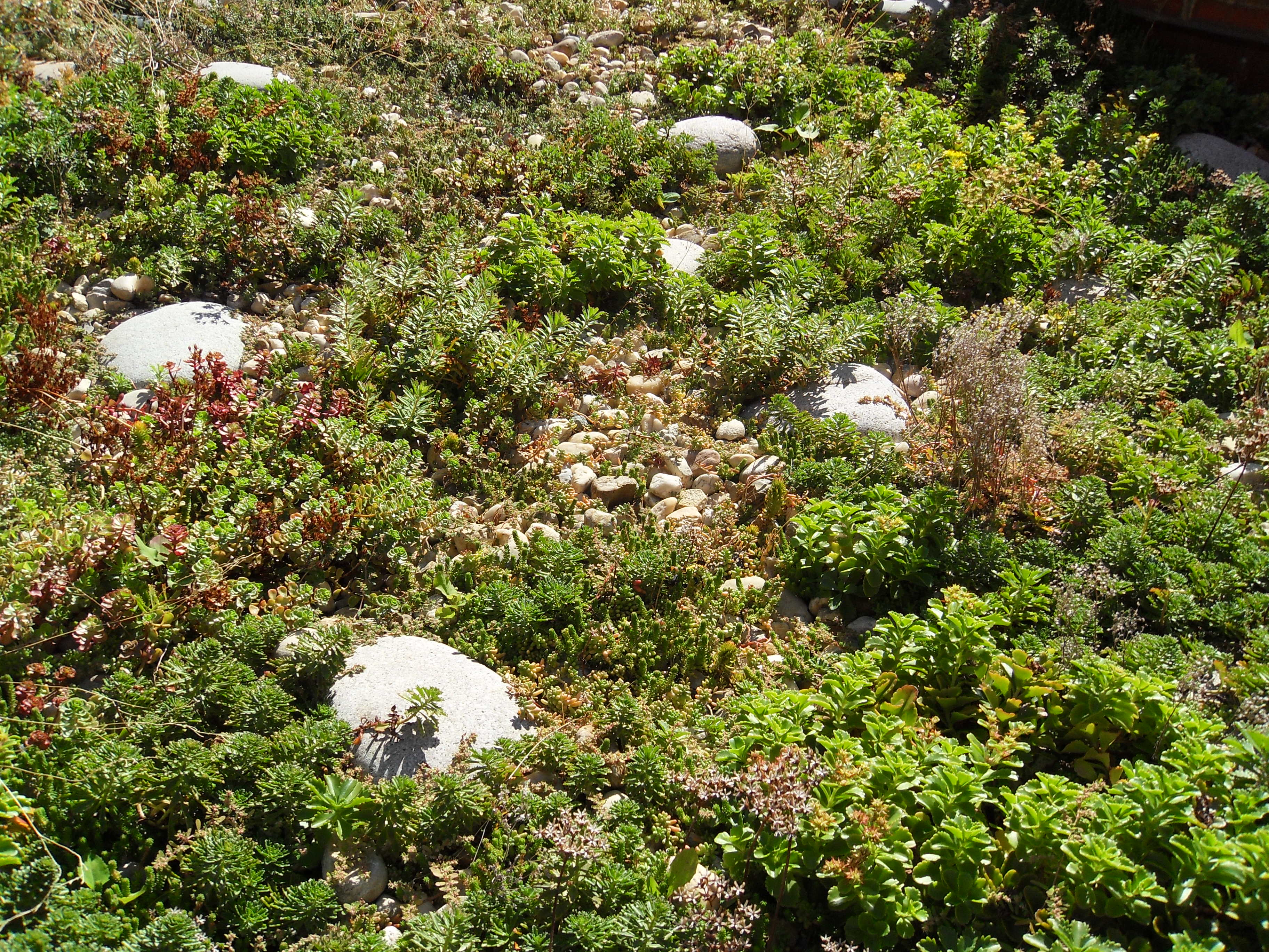 Tremco Roofing Greenroofs Com