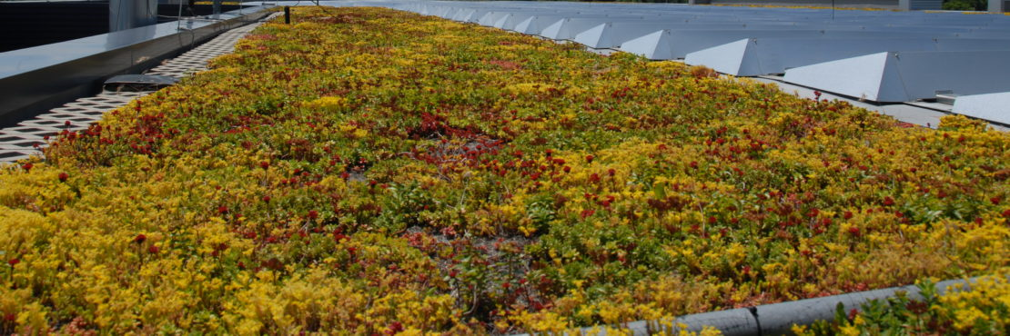 Apex Green Roofs, Inc. Featured Image