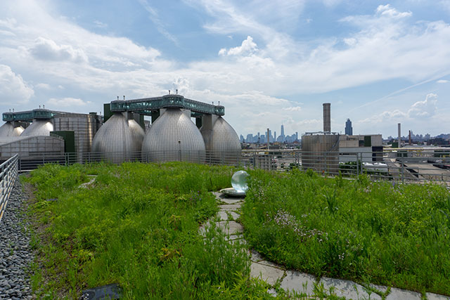 What Green Roofs Can Do for NYC's Environment and People