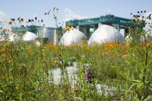 Kingsland Wildflowers1.'