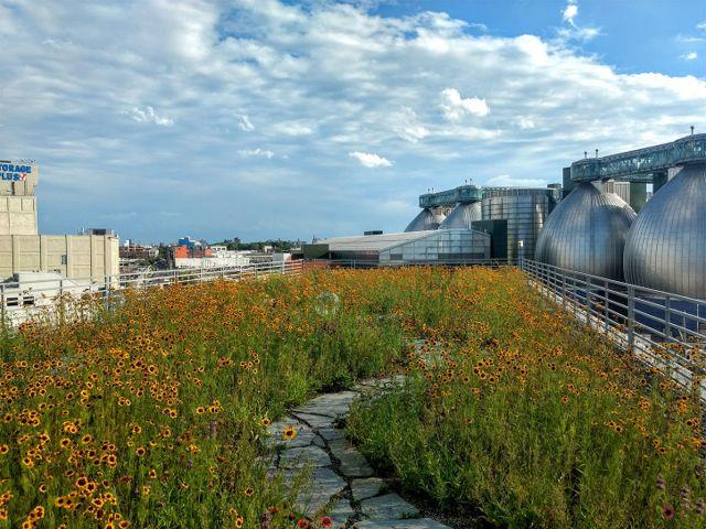 Kingsland Wildflowers Green Roof & Community Space