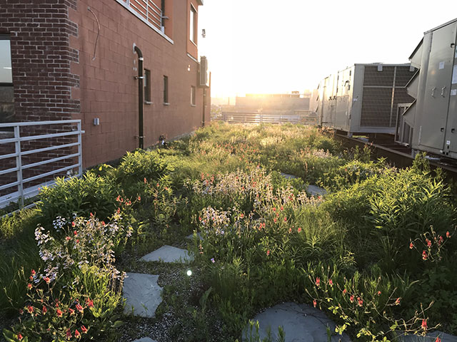 Kingsland Wildflowers Green Roof & Community Space