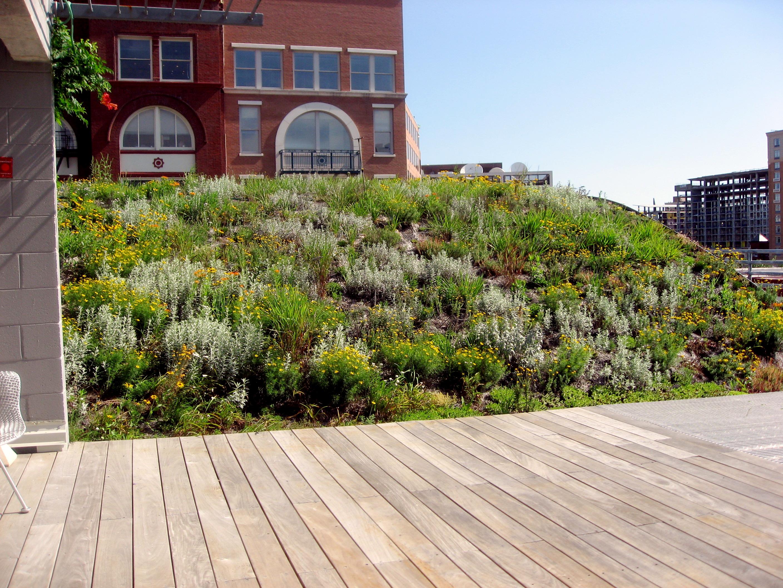 Landscape Architecture Washington Dc
