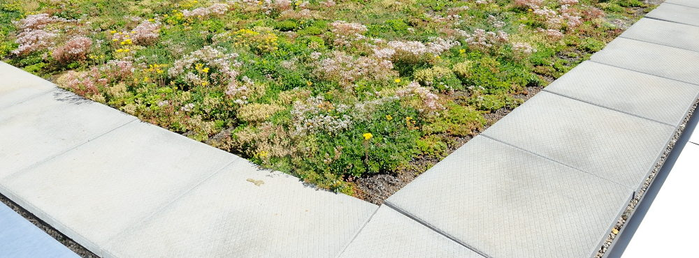 Stormwater Capture Co Featured Image