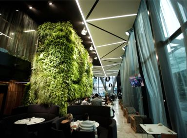 Auckland International Airport Novotel Hotel Green Wall Featured Image