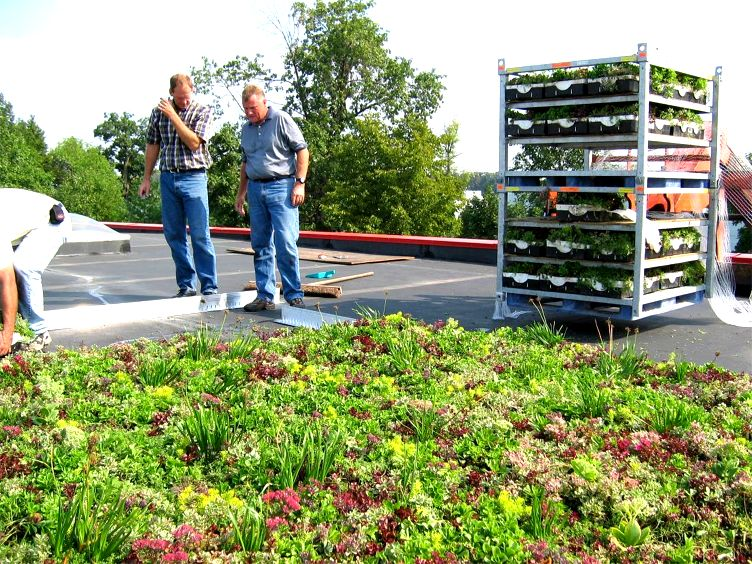 Anthony Roofing Greenroofs Com