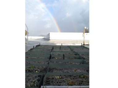 Belt Collins Green Roof Research Project Featured Image