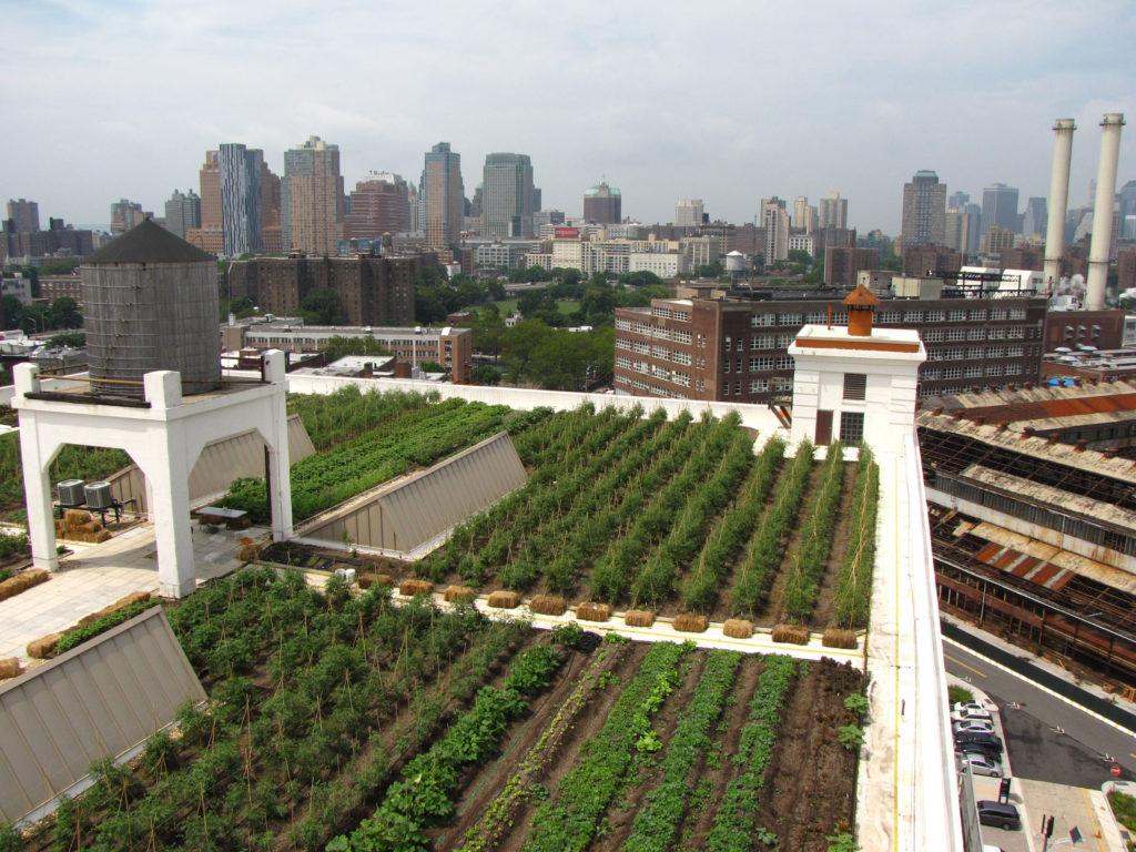 Roof Garden Plan View