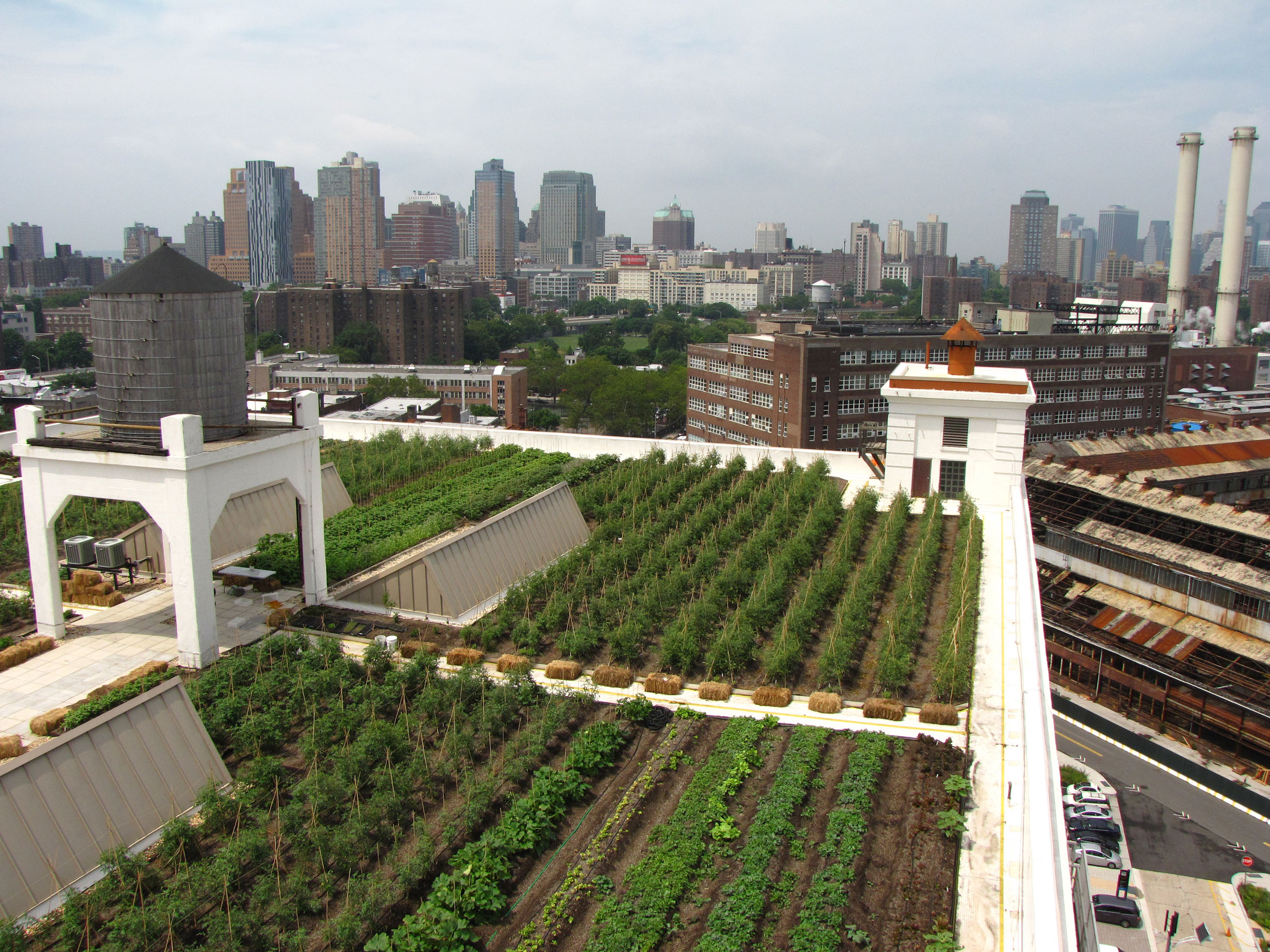 Brooklyn Grange Rooftop Farm #2 at Brooklyn Navy Yard, Building No. 3 Featured Image