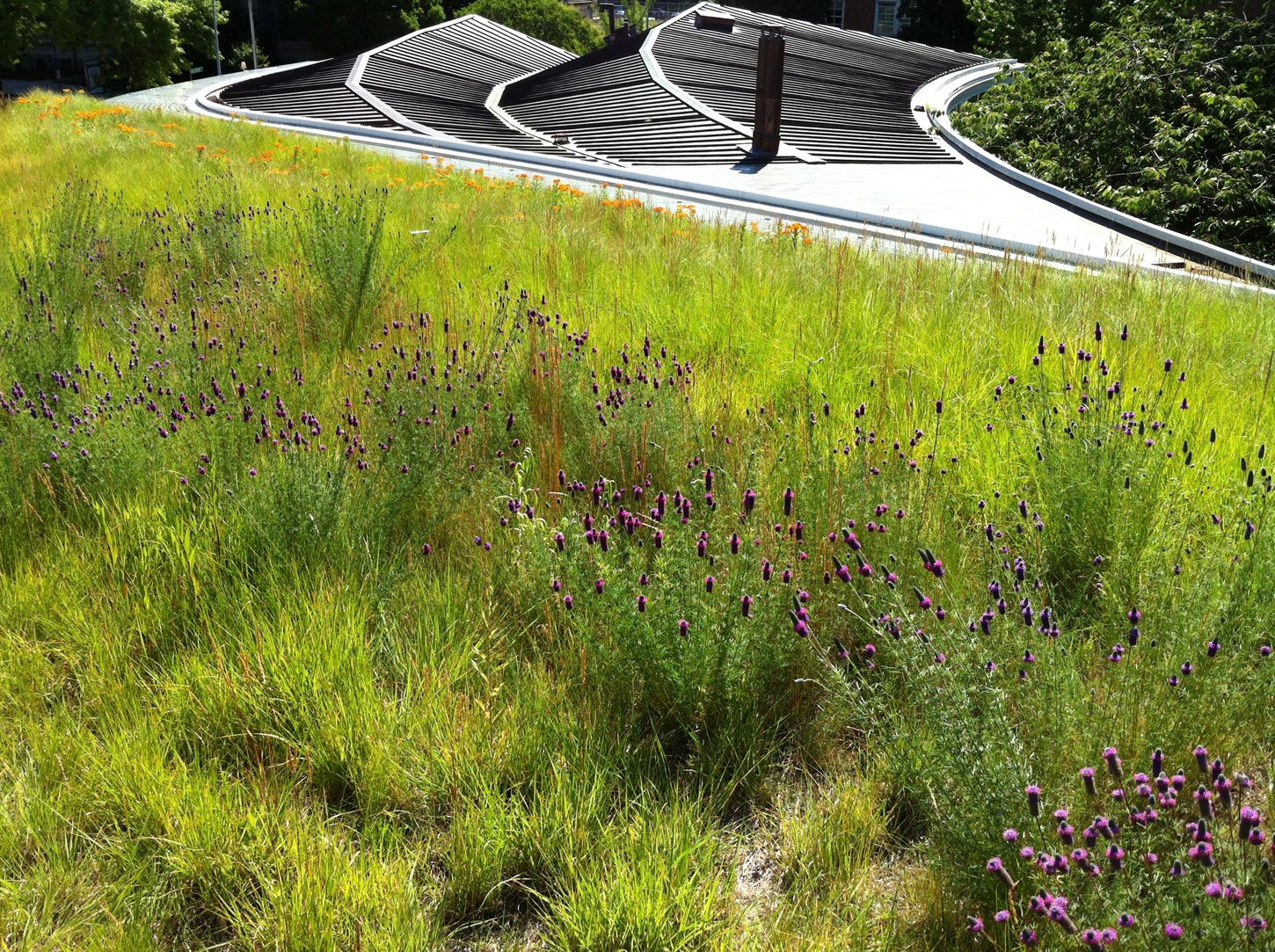 Brooklyn Botanic Garden Visitor Center Greenroofs Com