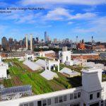 Brooklyn Grange Rooftop Farm #2 at Brooklyn Navy Yard Building No. 3