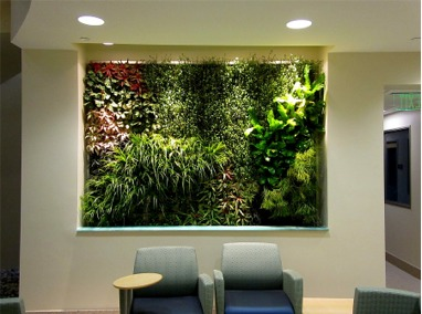 Center for Microbial Oceanography: Research and Education (C-MORE) Green Wall Featured Image
