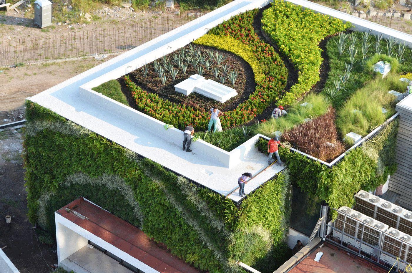 Casa vallarta greenroof for Casa design