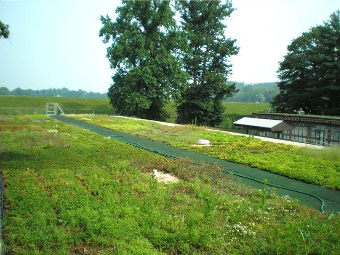 Center for Urban Ecology Featured Image