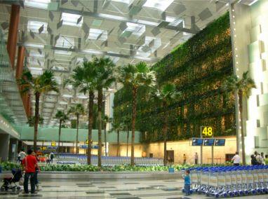 Singapore Changi Airport Terminal 3 Greenwall Featured Image