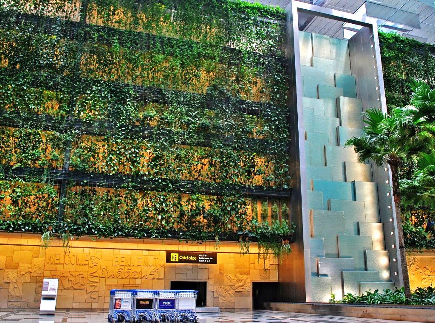 Climbers Plants Wall