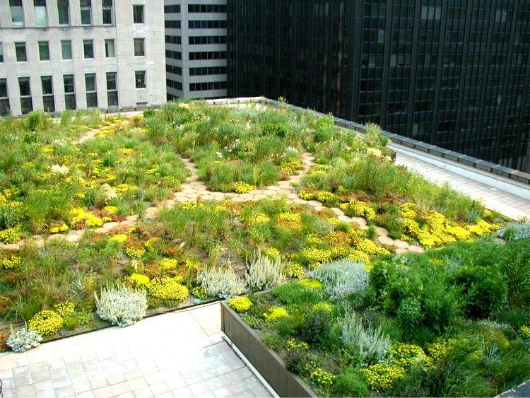 Chicago City Hall - Greenroofs.com