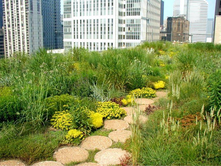 Urban Rooftop Garden Green Roofs