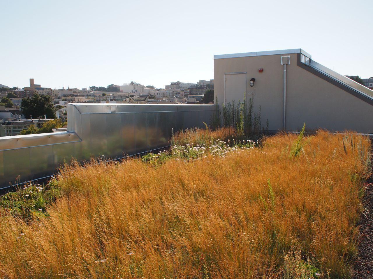 Drew School Sam Cuddleback III Assembly Wing Vertical Garden ...