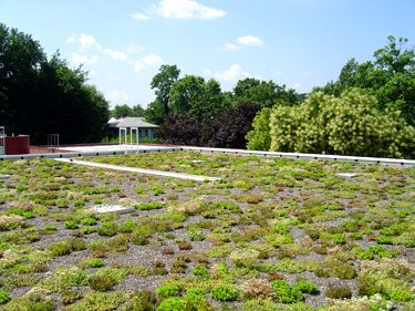 Duncan Library Greenroof Featured Image