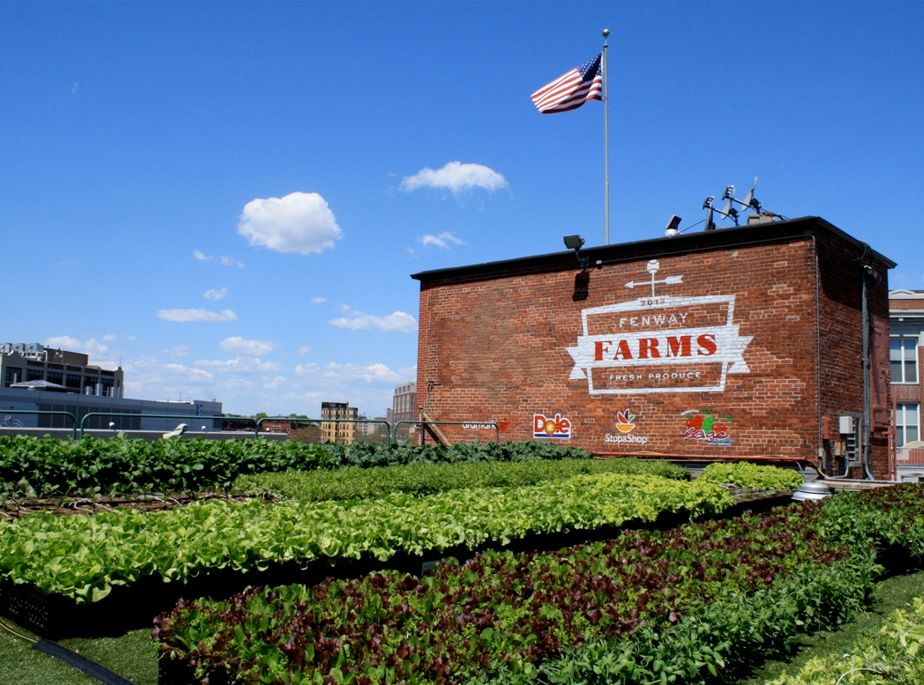Fenway Farms Featured Image
