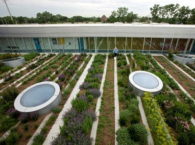 Delicieux Gary Comer Youth Center Green Roof