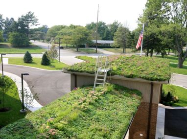 The Village at the Pines Green Roofs Featured Image