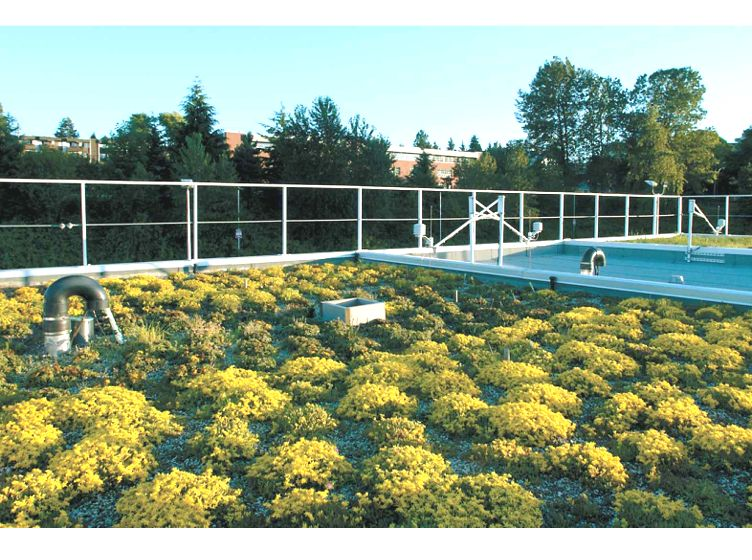 BCIT Green Roof Research Facility Featured Image