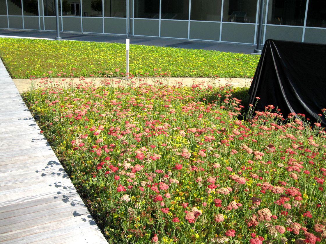 Hewlett Packard Building 4a Roof Amp Patio Upgrade