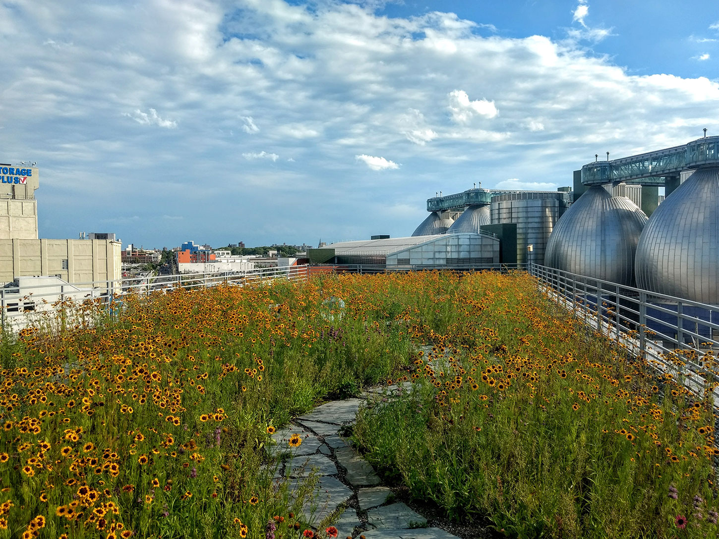 Kingsland Wildflowers Green Roof & Community Space Featured Image