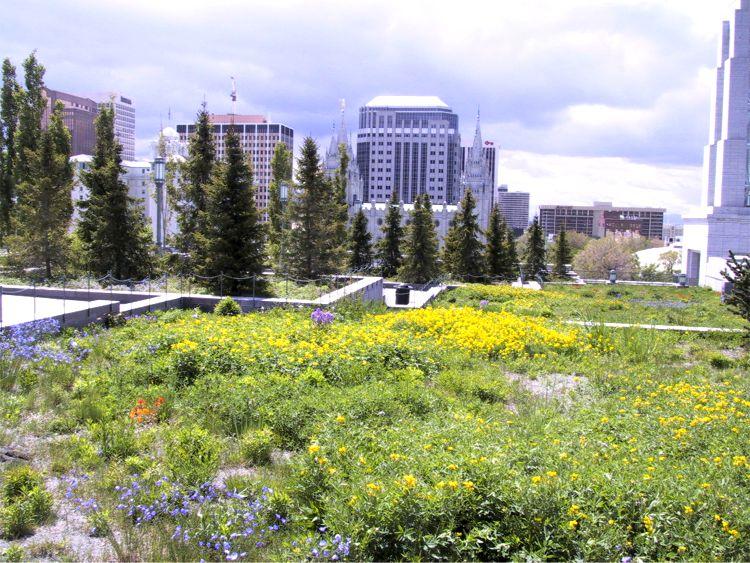 Skyline Flower Gardens Salt Lake City