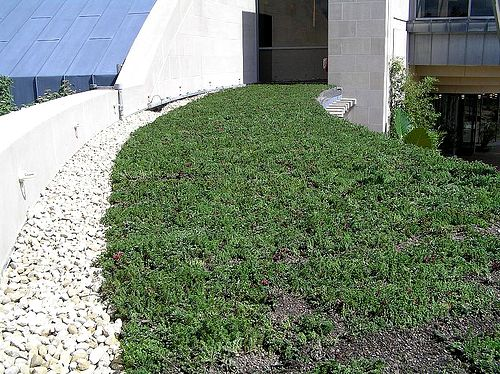 Minnetrista Green Roof Featured Image