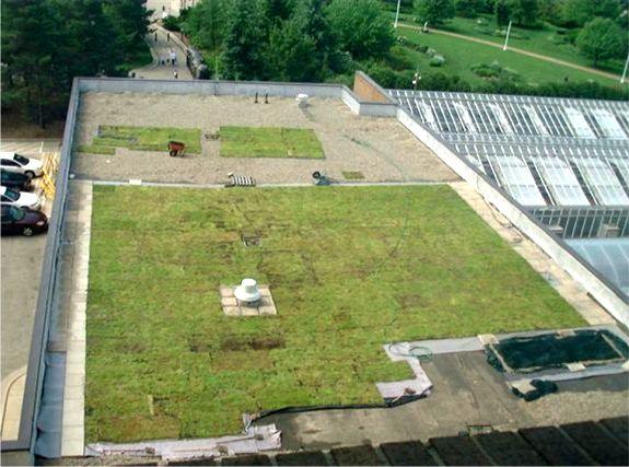 Michigan State University PSSB Featured Image