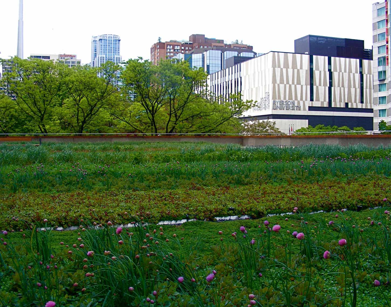 Nathan Phillips Square Toronto City Hall Podium Green Roof