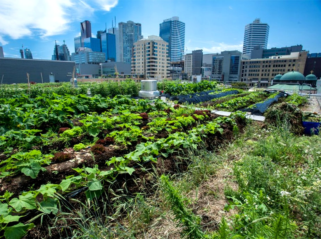 Ryerson Urban Farm (formerly Rye's Homegrown) Featured Image