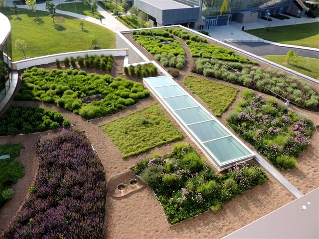 Northern Kentucky University Griffin Hall Greenroofs Com