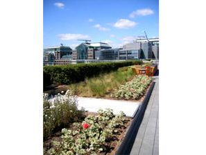 Allen Amp Overy Llp Hq Bishops Square Greenroofs Com