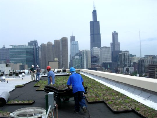 Chicago Residential Highrise Greenroofs Com