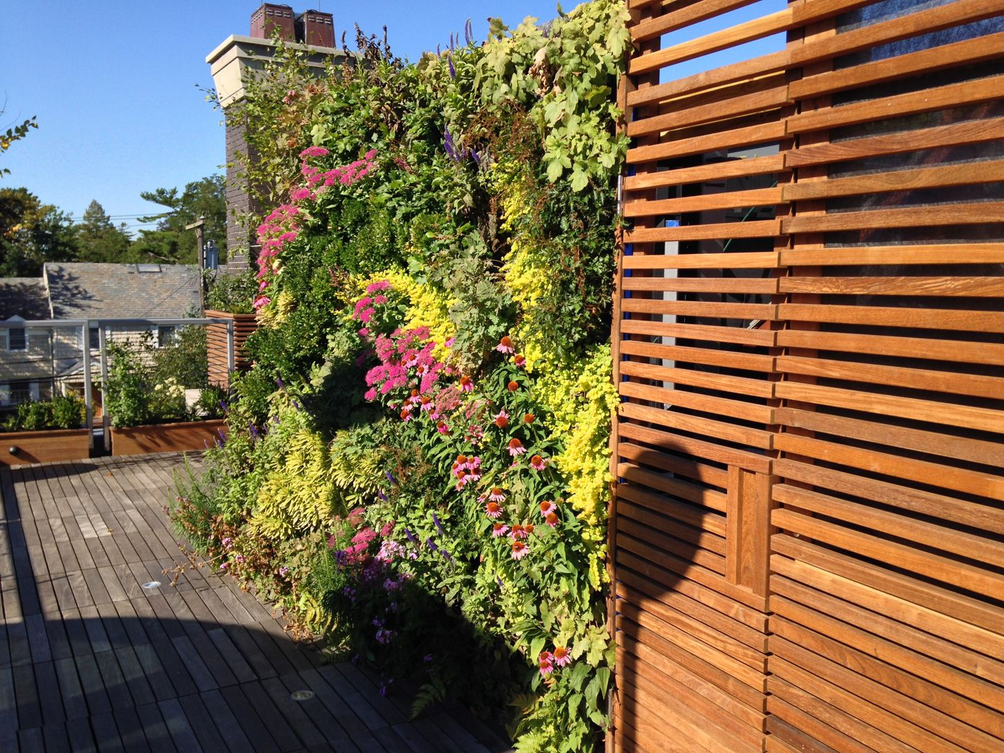 private roof terrace  greenwall landscape design