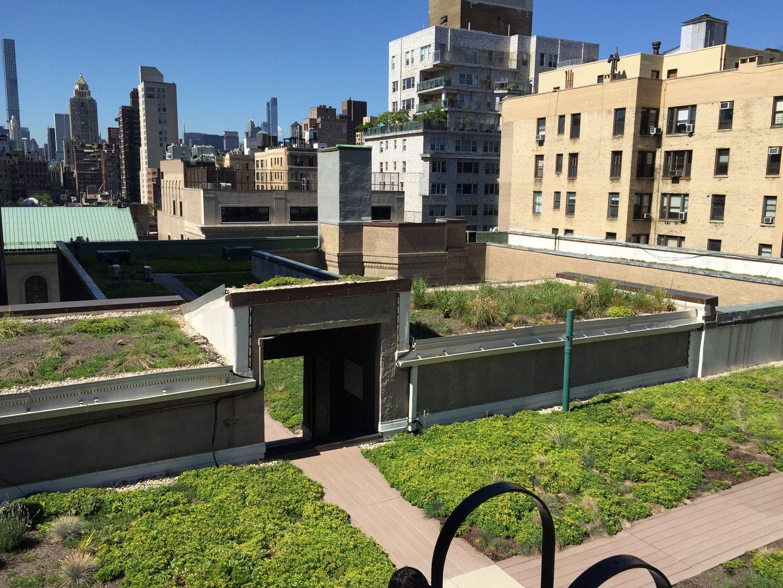 Garden Roof Architecture