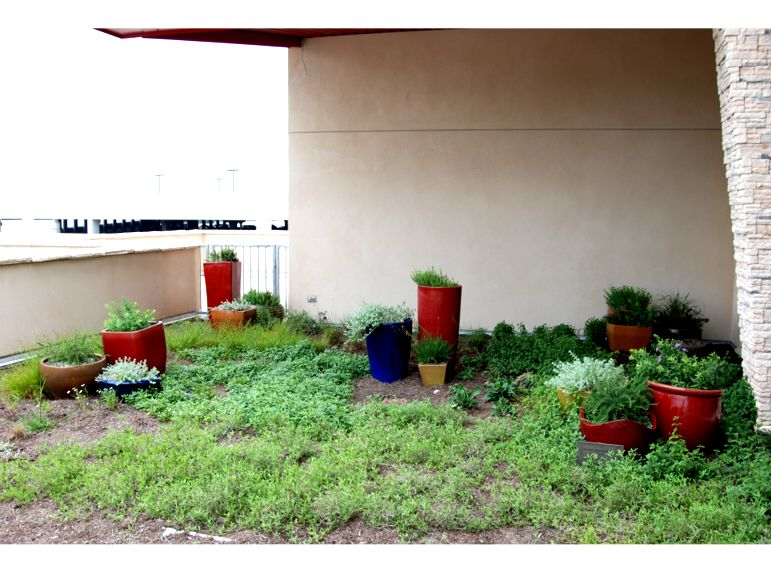 Ronald McDonald House of Austin - Greenroofs.com