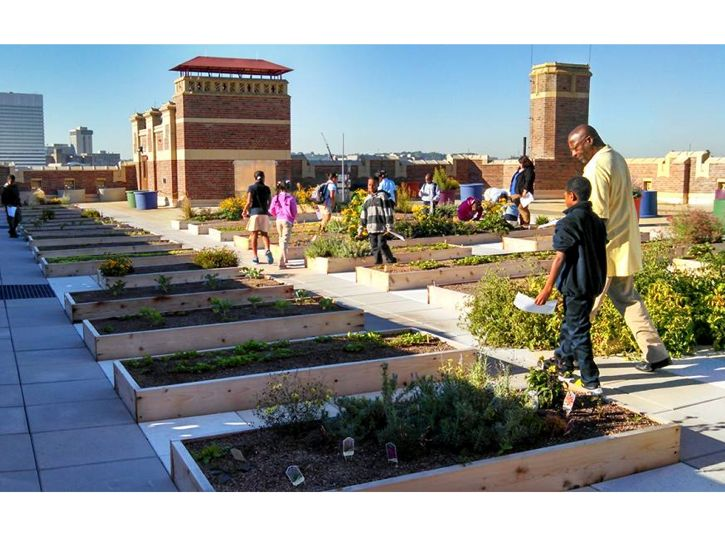 Rothenberg Rooftop Garden Featured Image
