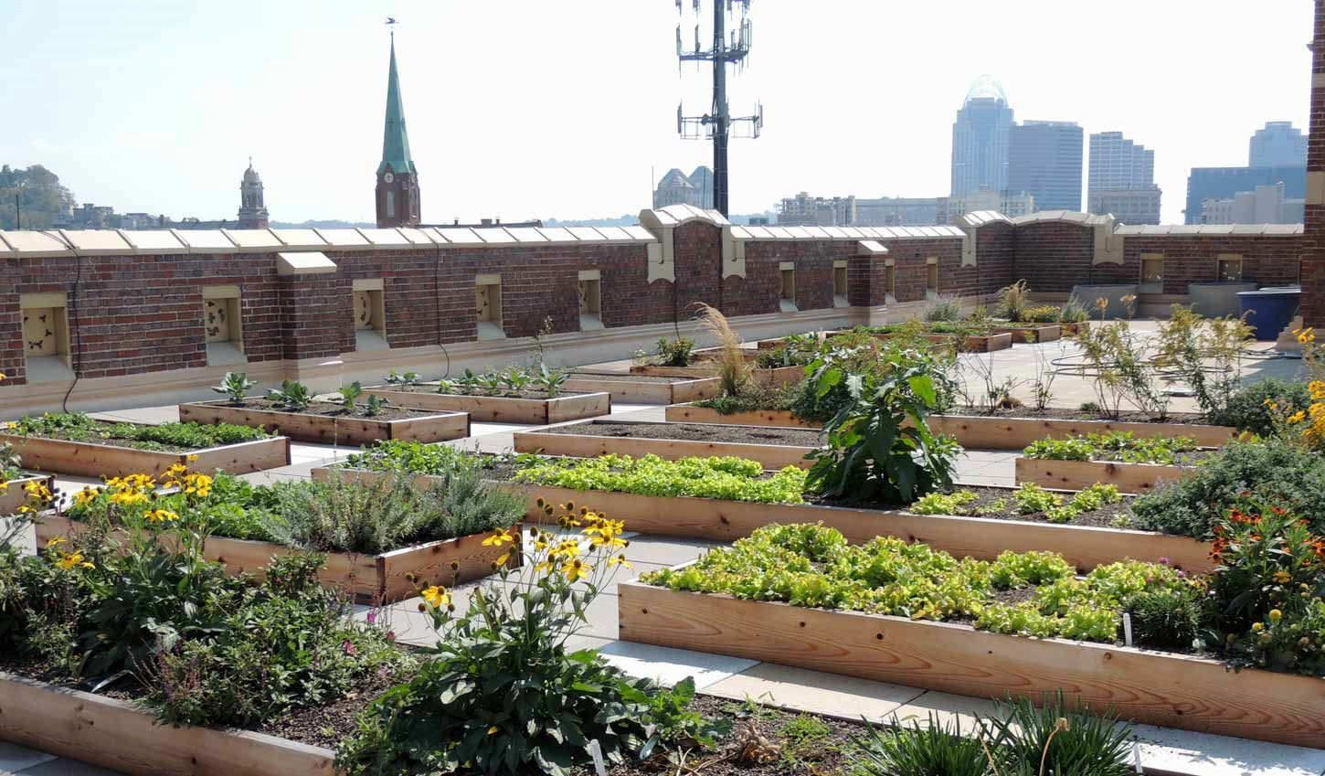 Rooftop Garden Urban Ideas