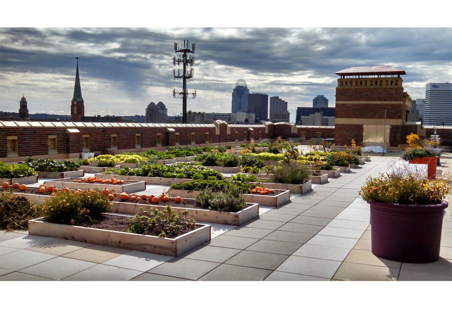 Rothenberg Rooftop Garden - Greenroofs com