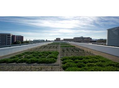 Tempe Transportation Center Roof Garden Featured Image
