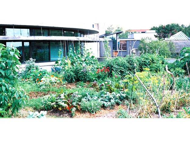 Trent University Environmental and Resource Sciences Vegetable Garden Featured Image